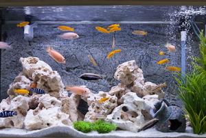 A fish aquarium.