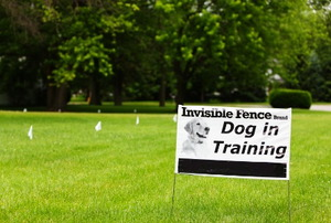 An Invisible Fence brand Dog in Training placard sign on a suburban residence front lawn.
