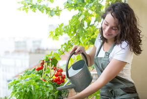 A young woman watering a tomato plant on a balcony.