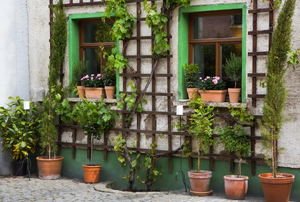 A wood trellis flanking two windows with plants in terracotta pots underneath.