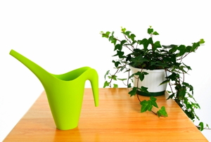Green watering can and ivy in pot.