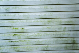 Mildew growth on light colored vinyl siding.