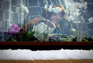 Looking through a snowy window at a smiling woman watering white orchids on the window shelf.