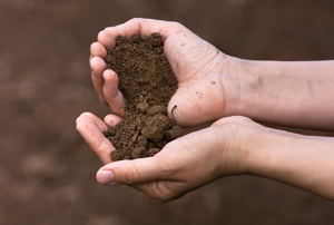 A pair of hands with brown soil in them.