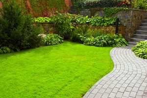 Guide to a Healthy Lawn