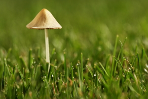 A Mushroom Invasion: How to Deal With the Fungi in Your Lawn