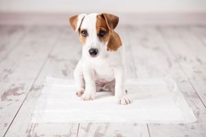 Your Pet vs. Your Hardwood Floors
