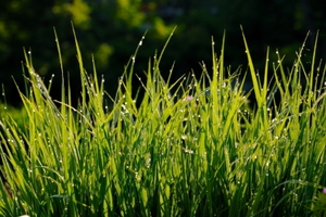 Easy-to-Maintain Lawns and Ground Covers