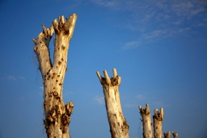 Pruning Trees - Harmful Practices
