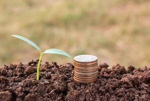 How to Save Money on a Vegetable Garden
