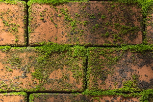 Moss Removal Tips
