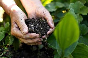 Making Organic Fertilizers for the Veggie Garden
