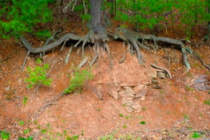 Prevent Erosion in Your Yard