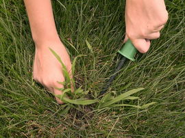 Different Types Of Crabgrass