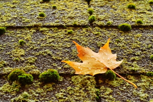 Protecting and Maintaining Asphalt Roofing Systems From Algae and Moss Growth