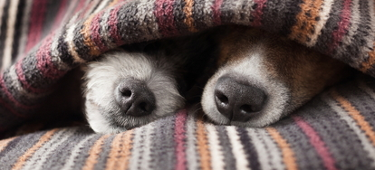 Many Household Items However Can Be Unsafe For Pets To Get Into Keep Your Pet Hy And Safe By Proofing House With A
