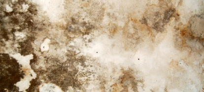 Black Mold Is A Serious Problem That Many People Are Faced With Every Day As It Can Spread Easily And Swiftly If Not Attended To