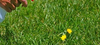 5 Weed Killers that Won't Harm Plants | DoItYourself com