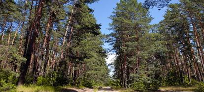 Redwood Lumber vs Douglas Fir Lumber   DoItYourself com