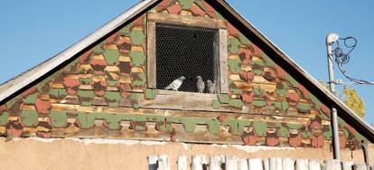 How To Get Rid Of Birds In The Attic Doityourself Com
