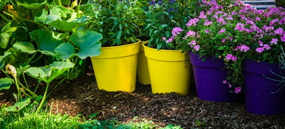 Warmer Weather Means It S Time For Fun Outdoors And Unfortunately Pesky Critters Luckily You Can Use Container Plants To Repel Bugs