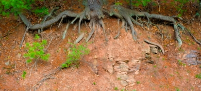 Prevent Erosion In Your Yard Doityourself Com