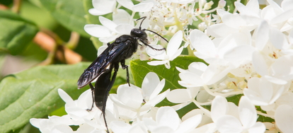 identifying and removing black wasps from your home doityourself com