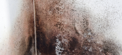 If You Are Concerned About Toxic Black Mold In Your Home Re Not Alone Is Dangerous To Humans Because It Produces Mycotoxins That Can Cause
