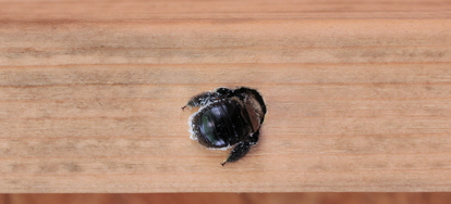 Keep Carpenter Bees Away From Your Home Doityourself Com