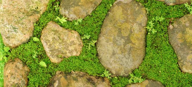 Diy A Charming Stone And Moss Walkway Doityourself Com