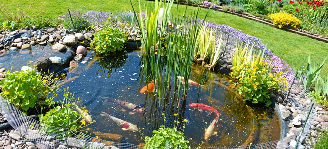 Keep your koi fish pond safe from predators for Koi fish in pool