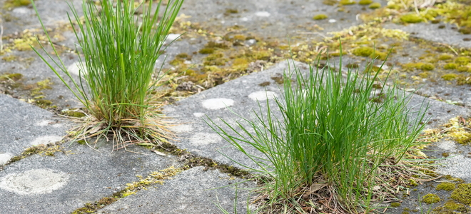How To Kill Weeds Between Patio Paving Stones How To Kill Weeds Between Patio  Paving Stones