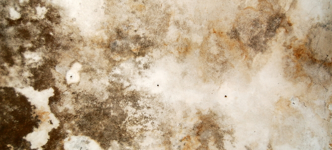 8 Black Mold Symptoms You Should Know  Doityourselfcom. Living Room Ideas Tan Leather Sofa. Wall Murals For Living Room. Decorating Ideas For Living Room With Fireplace. Mission Living Room Set. Small Living Room Storage. Living Room Pillows. Lime Green Color For Living Room. Oak Furniture Set Living Room