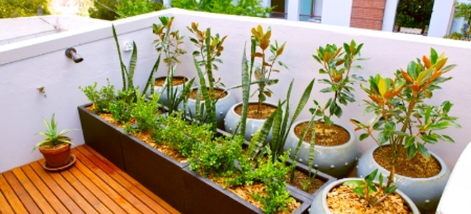 Even The Smallest Patios Or Apartment Balconies Can Be Transformed Into  Small Garden Sanctuaries. With A Little Forethought And A Love For Plants,  ...