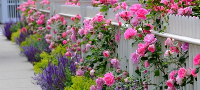 Three Decorative Garden Fence Ideas DoItYourselfcom