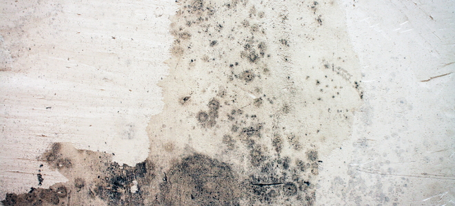 How to remove mold from concrete basement walls for Getting grease off concrete