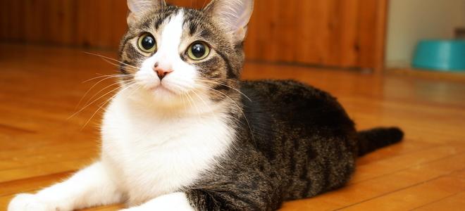 cat urination drench copse floor