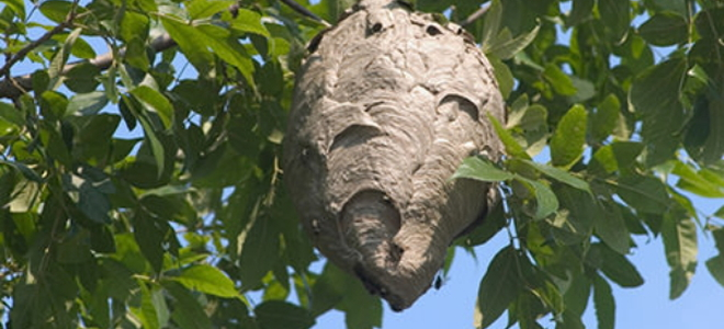 How to remove a beehive in 6 steps doityourself beehive removal sounds like a frightening prospect but it doesnt have to be you do need to be aware of a few things and follow certain steps in order to solutioingenieria Images