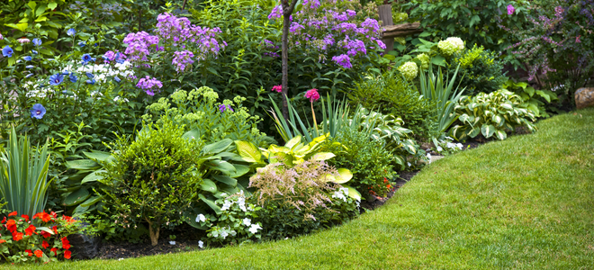 keeping ground cover away from perennial garden plants, Natural flower