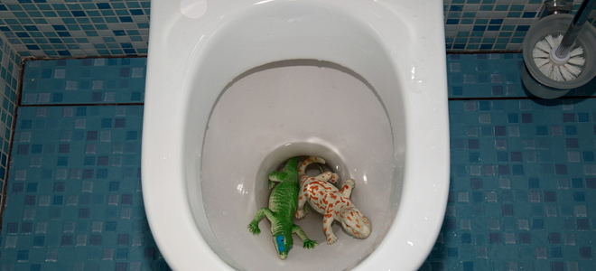 Clogged Toilet: How to Remove Toys and Objects | DoItYourself.com