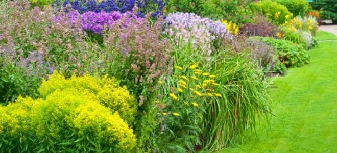Easy Care Popular Flowering Shrubs Doityourself Com