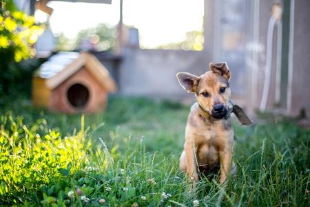 How to Create a Dog Friendly Backyard | DoItYourself.com