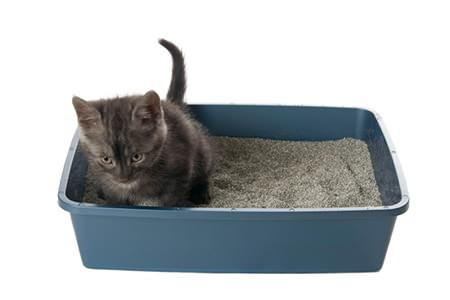 Cat Refuses To Use Litter Box Anymore