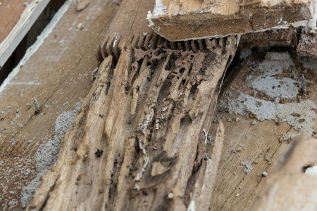 How To Get Rid Of Wood Borers Doityourself Com