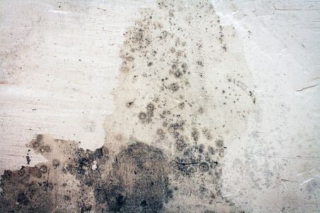 How To Remove Mold From Concrete Basement Walls