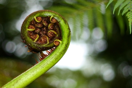 taking care of your australian tree fern. Black Bedroom Furniture Sets. Home Design Ideas
