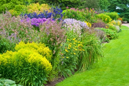 Easy care popular flowering shrubs for Easy care plants for landscaping