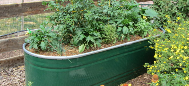A vegetable planter made from a water trough.