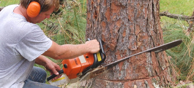 man creating a notch wedge cut on a tree trunk with a chainsaw
