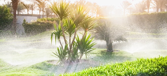 sprinklers on the lawn with palm trees in bright sun